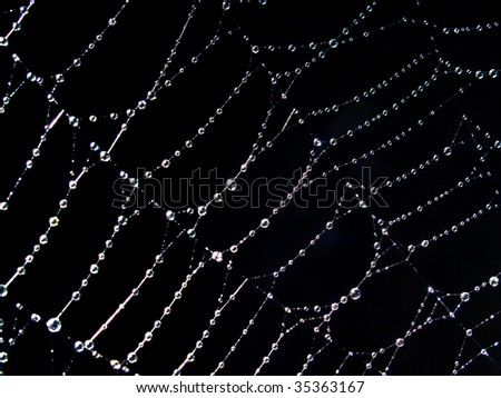 Shining water drops on spiderweb. - stock photo