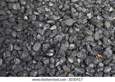 Shiny black coal highlighted with brown leaves