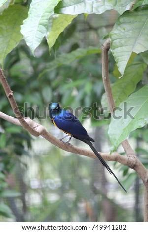 Shiny Blue Bird #749941282