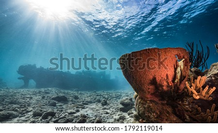 Ship wreck 'Tugboat' in  shallow water of coral reef in Caribbean sea with big Sponge and view to surface and sunbeams Сток-фото ©