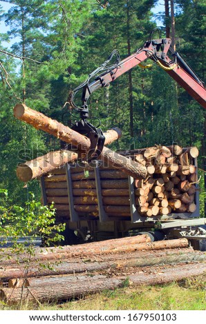 Shipping timber. Loading felled trees in the timber crane.