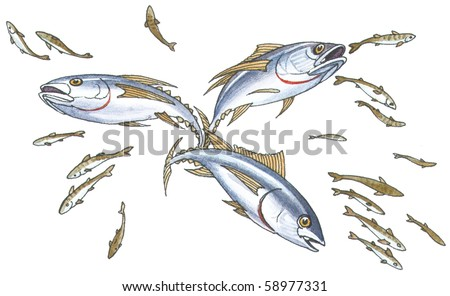 Shoal mackerel on hunting.