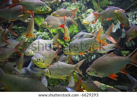 Shoal of fish