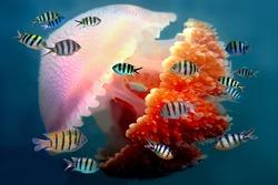 Shoal of fish and Mosaic jellyfish