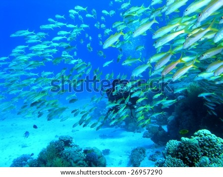 Shoal of fish and the diver - stock photo