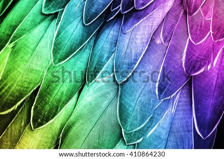 Shoebill  Feathers Detail - Closeup Bird Feather Photo