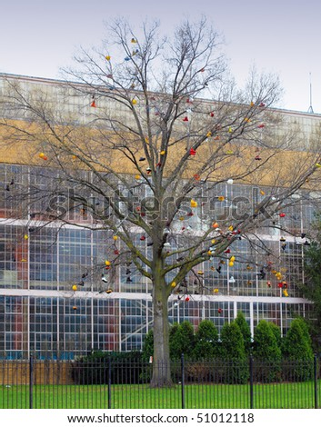 Shoes and Hats hanging over leafless tree - stock photo