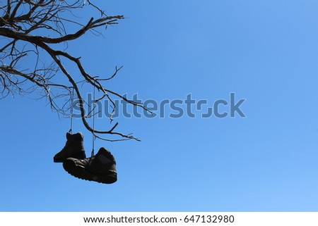 shoes hanging from a tree #647132980