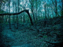 Shoot of the dark and creepy forest with broken branch
