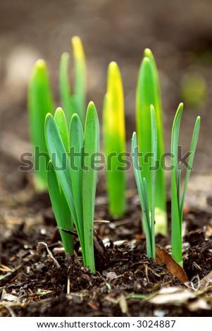 spring flower clip art images. spring flower clip art images.