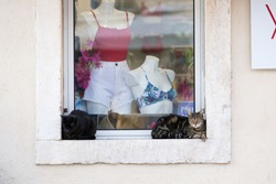 Shop window with swimwear and summer clothes and two cats in the window