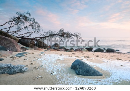 shore in winter