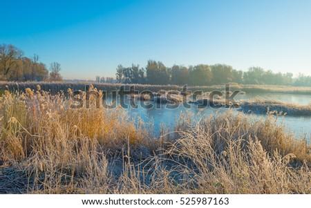 Shore of a frozen lake in sunlight in autumn #525987163