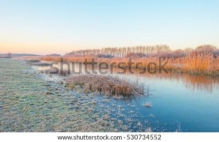 Shore of a frozen lake in sunlight in winter #530734552