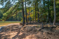 Shoreline erosion at the lake with the sand washed away exposing the roots on the trees with shadows cast on the beach by the bright sunlight through the trees in autumn