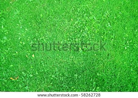 Short cut green grass viewed from above