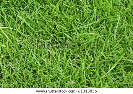 Short grass background stock photo 61313836 shutterstock for Short variegated grass