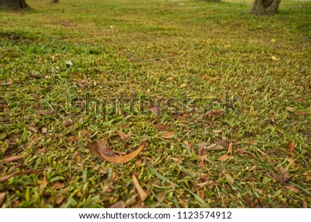 short grass field with dry leaf