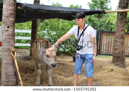 Short-haired Asian teenage girl with a water buffalo on a holiday in the countryside countryside tourism concept. #1503745202