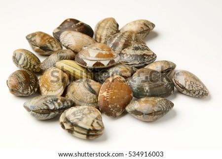 short-necked clams Сток-фото ©