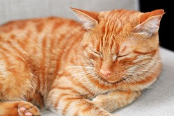 Shorthair red-haired striped beautiful cat lies on a beige chair at home on a summer day and sleeps, horizontal photo. The focus is on the cat's face, the portrait of the cat is large.