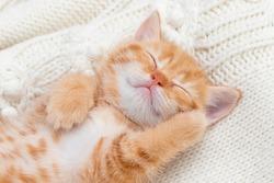 Shorthair red kitten on a light background