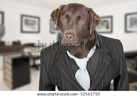Shot of a Chocolate Labrador in Pin Stripe Suit against Office Backdrop - Working Like A Dog