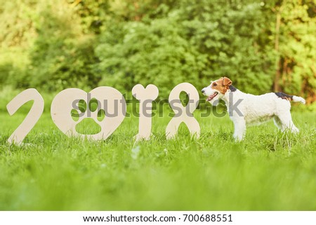 Shot of an adorable wire fox terrier standing near 2018 numbers symbolizing Chinese new year of the dog.