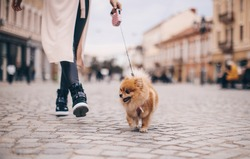 Shot of cool beautiful young woman walking while shopping for the city with her little dog.