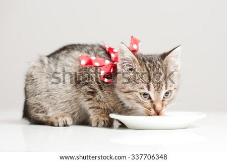 Shot of cute hungry little tabby kitten.