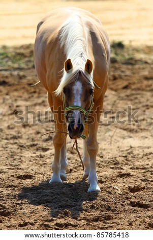 shot of eating pretty  horse