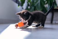 Shot of little black kitten playing and enjoys with orange ball at living room of house.