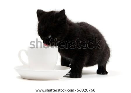 Shot of little cute black kitten isolated on white