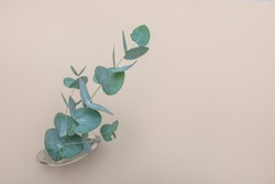 Shot of sprig of eucalyptus in a glass bottle on beige background with copy space. Floral frame, web banner. Top view. Picture for blog or social media.