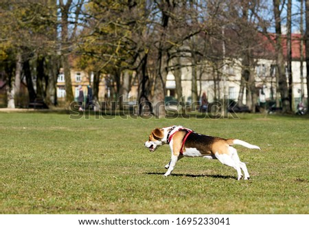 Photo of Show dog of breed of beagle on a natural green background