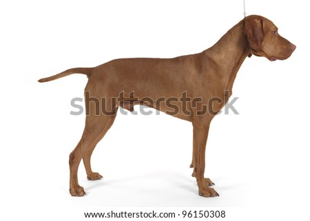 show dog stacked on white background
