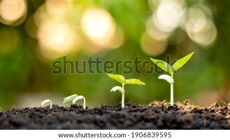 Shows the stages of trees growing on the ground in a rich natural environment. Ideas about natural plant growth and tree care.