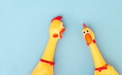 Shrilling Chicken toy on a blue background. Rubber squeaky Chicken Toys are isolated on a blue background. Copyspace