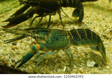 Shrimp are aquatic animals living in the sea can be cooked. #1250462392