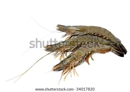 shrimp big raw isolated in white background