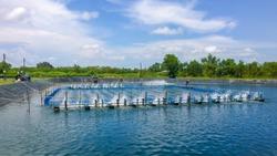 shrimp farm and water turbine