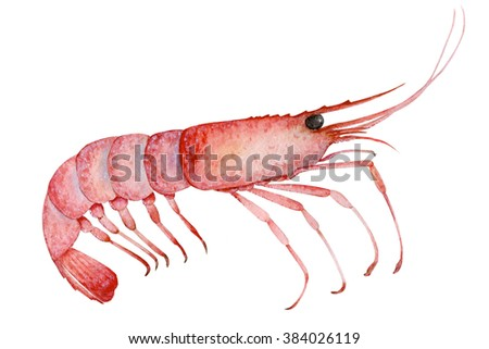 Shrimp painted with watercolors