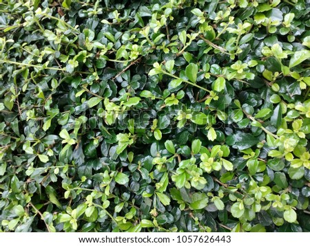 Shrub green Shrub #1057626443