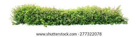 Shrub isolated on white background - Shutterstock ID 277322078