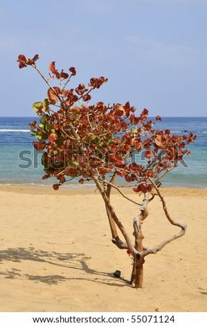 fast growing deciduous shrubs for florida