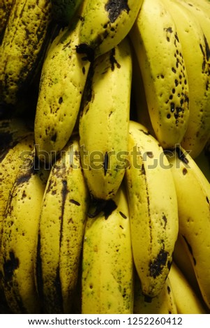 Shrub of fresh bananas. Small and sweet ones