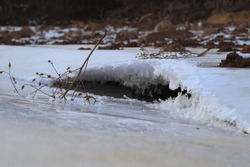 shrubbery in a freezing stream