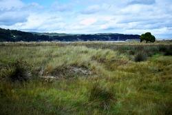 shrubbery on the beach of Covas in Viveiro, Lugo, Galicia. Spain. Europe.