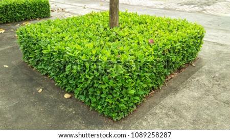 shrubs square . shrubs  green tree on gardening background #1089258287