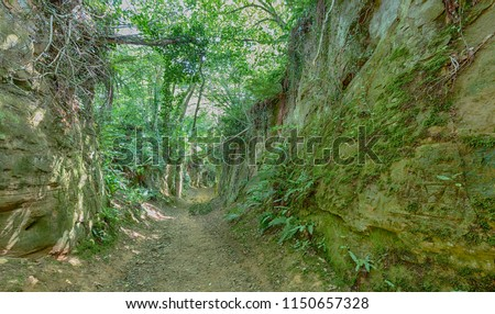 Shutes Lane, an ancient hollow-way or track at Symondsbury in Dorset, England. Footfall over thousands of years has worn the soft sandstone into a gorge.